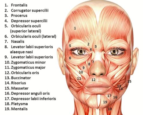 Botox 101 | Elite Medical & Aesthetics | Centennial, CO