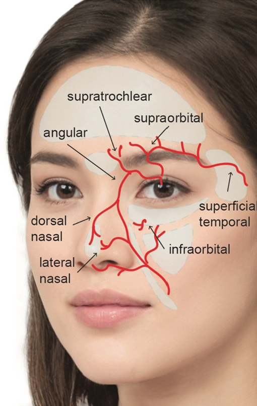 Vascular system for under eye fillers